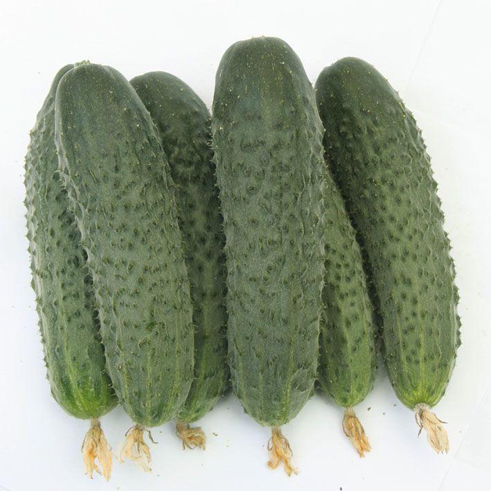 Гавриш Атаман F1 семена огурца партенокарпического (Гавриш) Атаман_семена_овощей_оптом.jpg