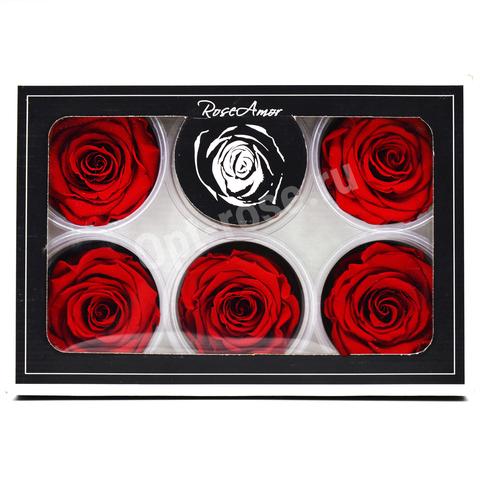 Стабилизированный Бутон Розы Rose Amour XL. Цвет Красный (Диаметр 6-7см)