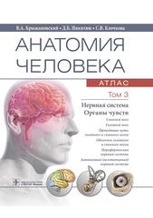 Анатомия человека : атлас : учебное пособие : в 3 т. Т. 3. Нервная система. Органы чувств (Крыжановский)