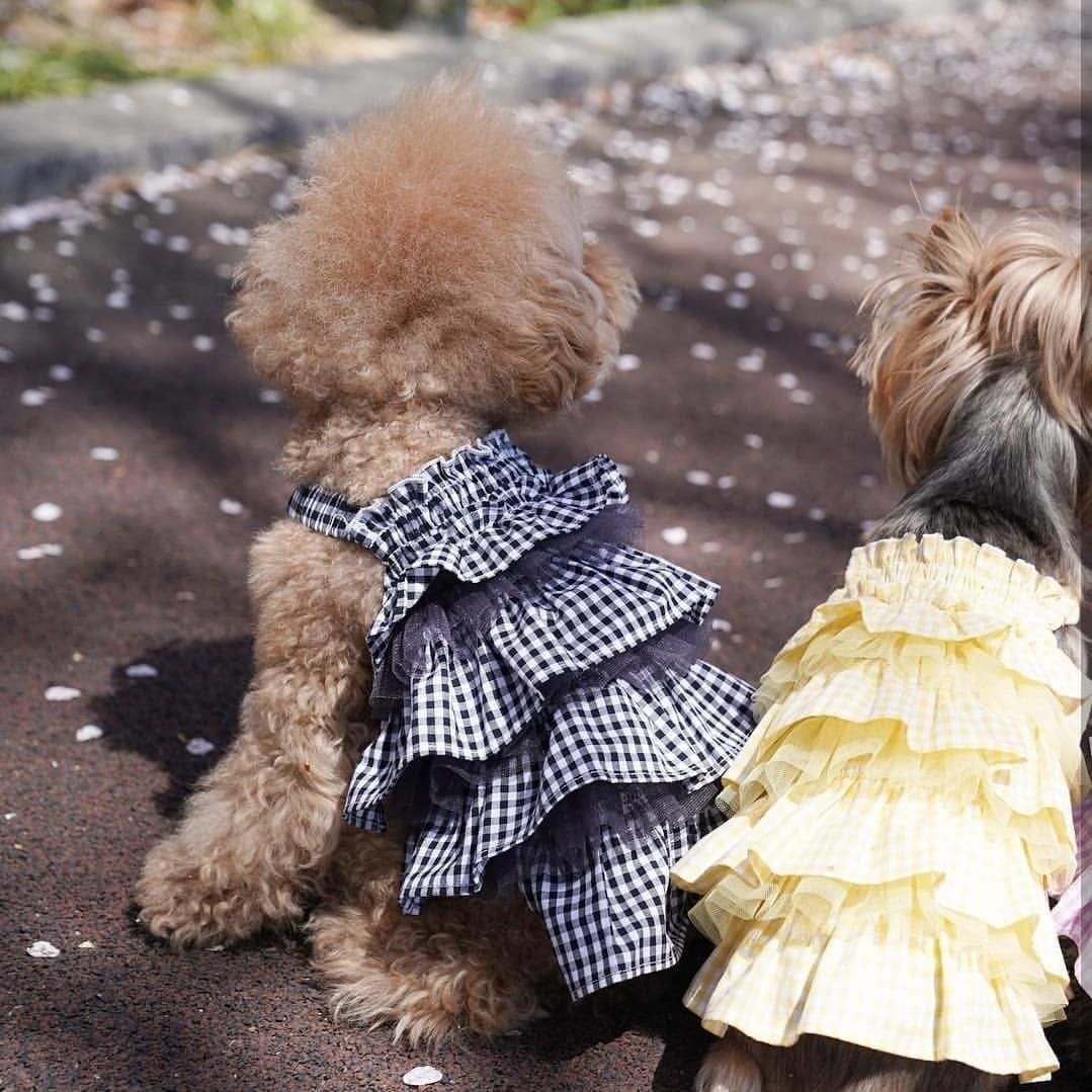 летний сарафан для собак