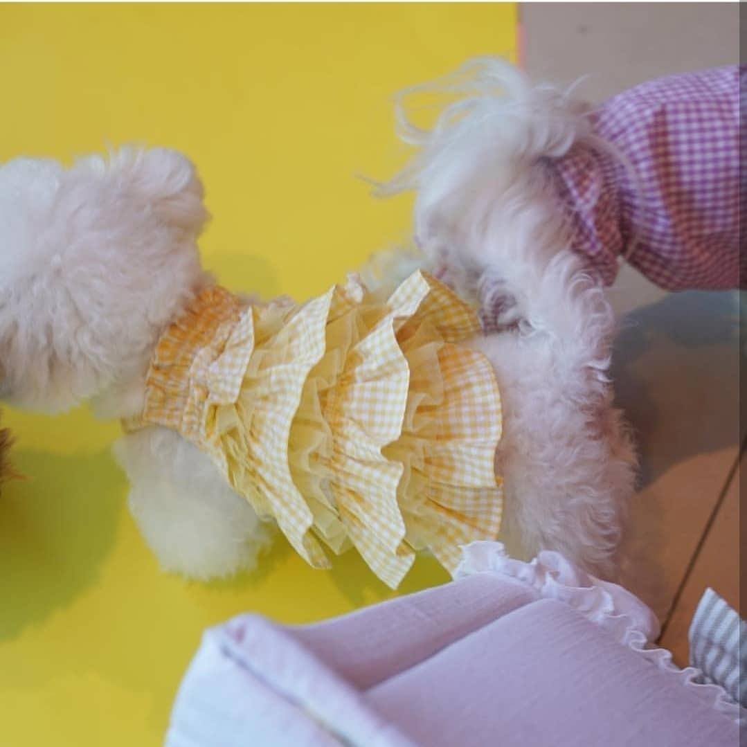 летние сарафаны для собак puppyangel