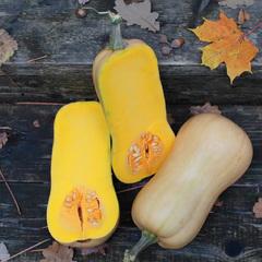 Страдивари семена тыквы (Гавриш)