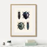 Марк Кейтсби - Assorted Beetles №1, 1735г.