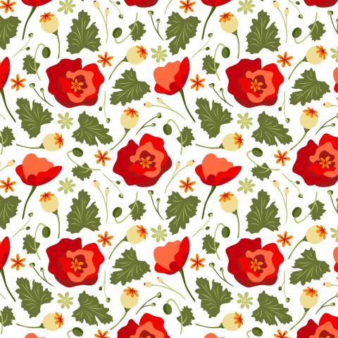 Красные маки. Летние цветы на белом фоне