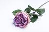 Светло-сиреневая роза.