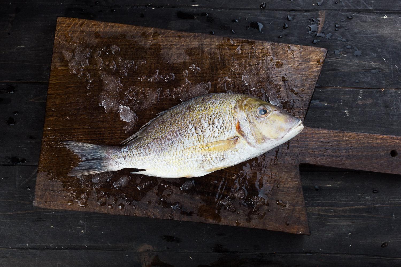 Императорская рыба