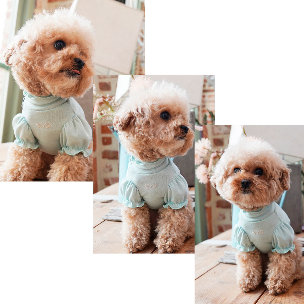 одежда для собак интернет