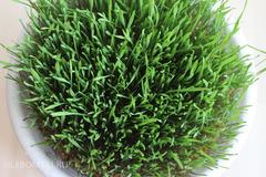 Проращиватель Eschenfelder для ростков пшеницы (Витграсс) черный