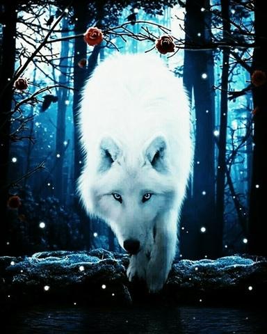 Алмазная Мозаика 20x30 Белоснежный волк (арт. MTC3459)
