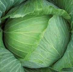 Бартон F1 семена капусты белокочанной (Hazera / Хазера)
