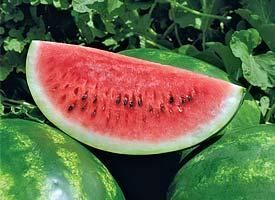Syngenta Арашан F1 семена арбуза (Syngenta / Сингента) Арашан_F1_семена_овощей_оптом.jpg