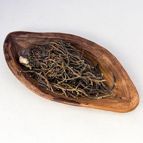 Травы Кукольник (Чемерица), корень veratrum-root-350.jpg