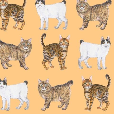 Породистые котики на оранжевом. Purebred cats on orange