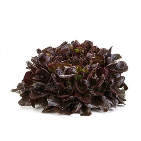 Листовой Ксем семена салата листового (Rijk Zwaan / Райк Цваан) ксем_3.jpg