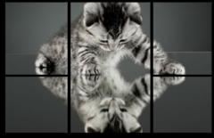 """Модульная картина """"Отражение кошки"""""""