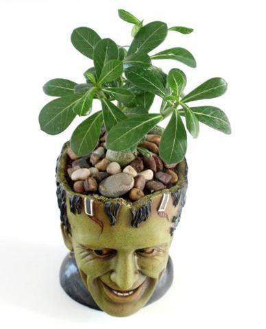 Франкенштейн горшок цветочный