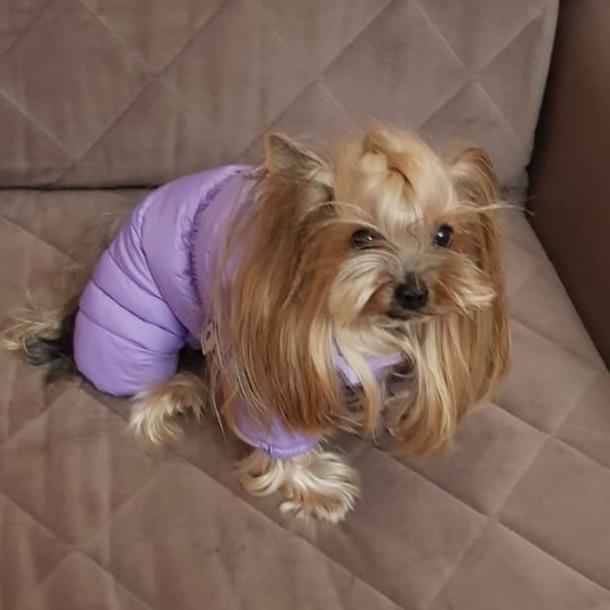 BH - Комбинезоны для собак