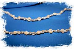 Бусы из морских ракушек Ципрея Аннулус и Насса