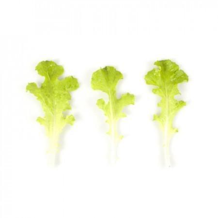 Rijk Zwaan Карловия семена салата бэби-лиф (Rijk Zwaan / Райк Цваан) КАРЛОВИЯ.jpg
