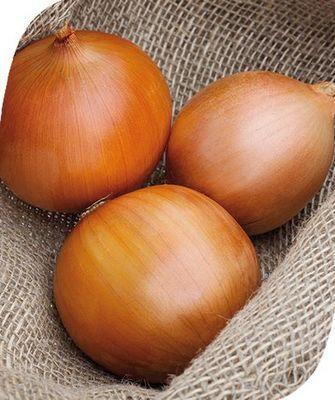 Репчатый Замбези F1 семена лука репчатого (Seminis / Семинис) Замбези.jpg