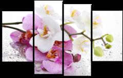 "Модульная картина ""Мокрая орхидея"""