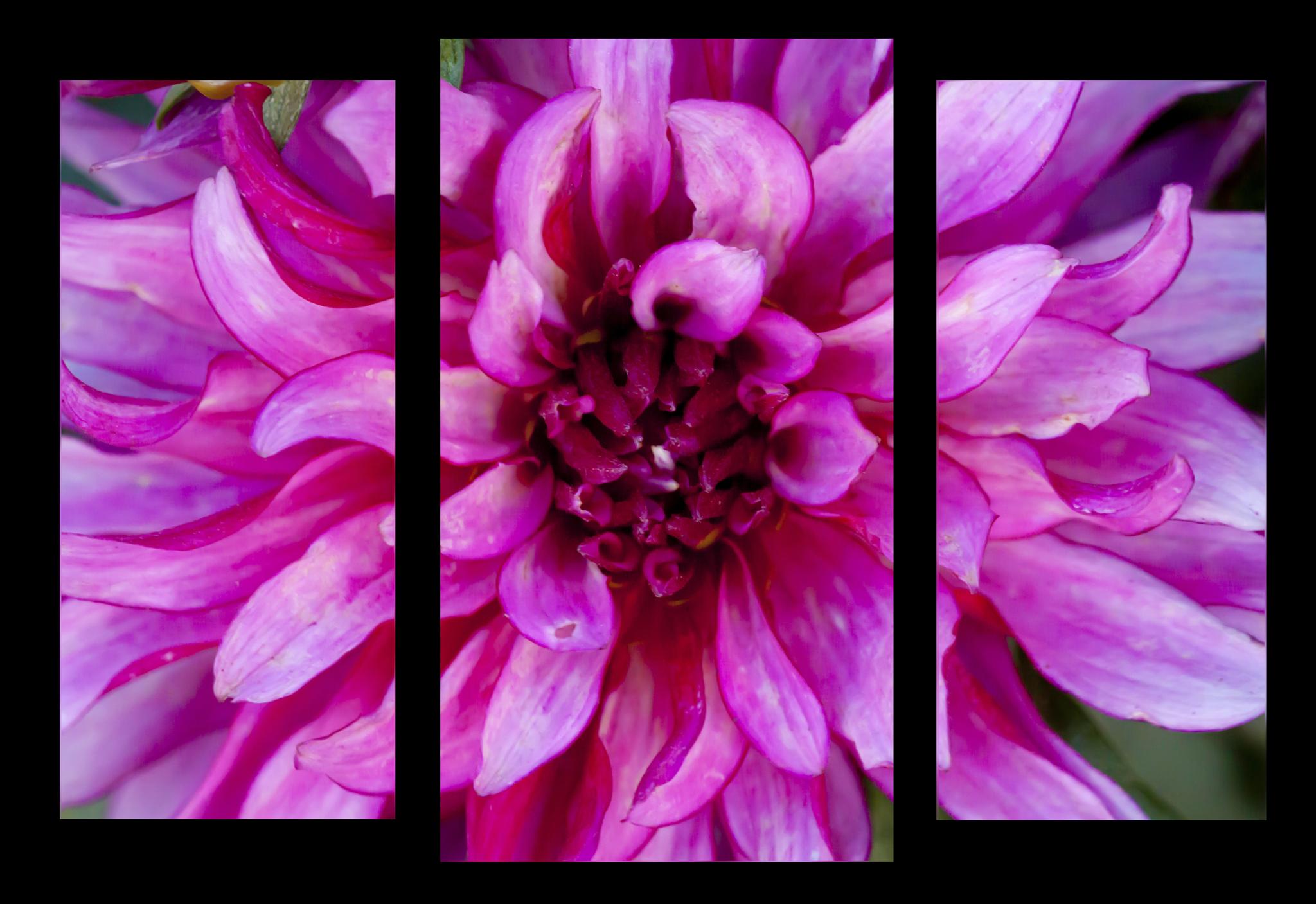 """Цветы Модульная картина """"Георгины цветы"""" М1053_M_загибы_100х74.png"""