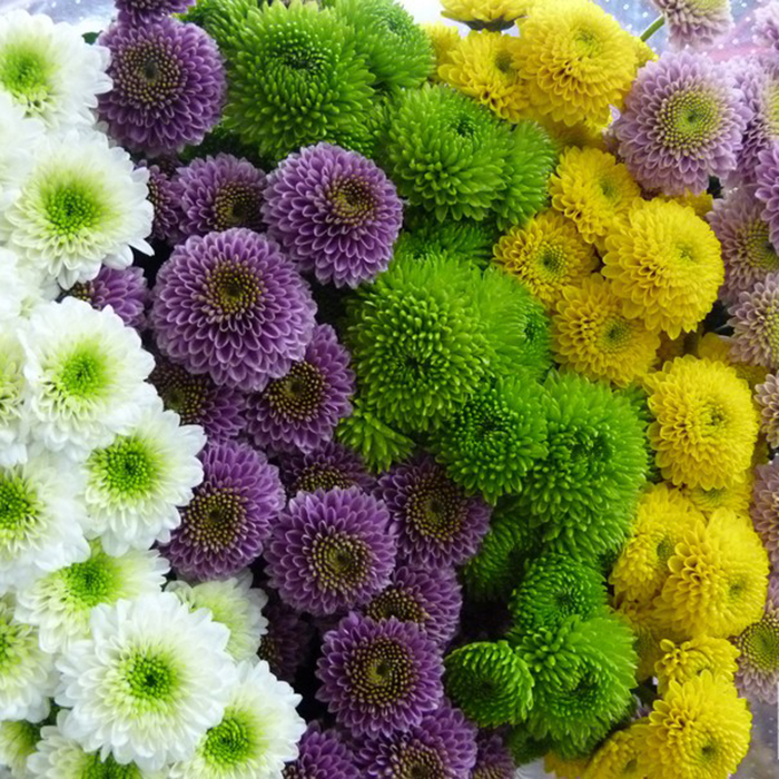 Хризантемы Сантини от 9шт