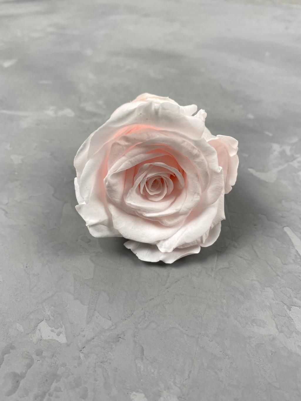 Роза классическая персиково-розовая d=5,5 см