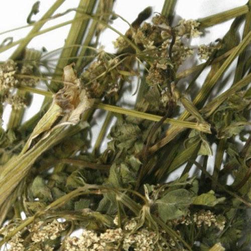 Травы Купырь лесной anthriscus-369.jpg