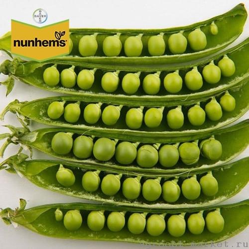 Nunhems Женева семена гороха (Nunhems / Нюнемс) женева.jpg