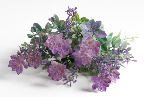 Куст с цветками каменной розы припылённый.