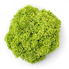 Лимейра семена салата листового (Rijk Zwaan / Райк Цваан)