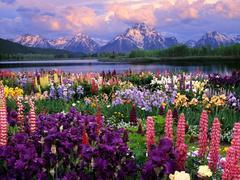 Алмазная Мозаика 50x65 Поле цветов на фоне гор