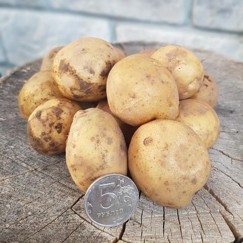 Картофель ассорти мелкий БИО (Васильки), кг