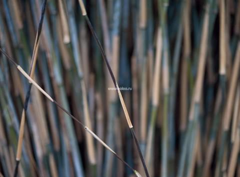 Фотообои (панно) Mr. Perswall Photo DM318-3, интернет магазин Волео