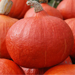 Оранж Саммер F1 семена тыквы (Enza Zaden / Энза Заден)