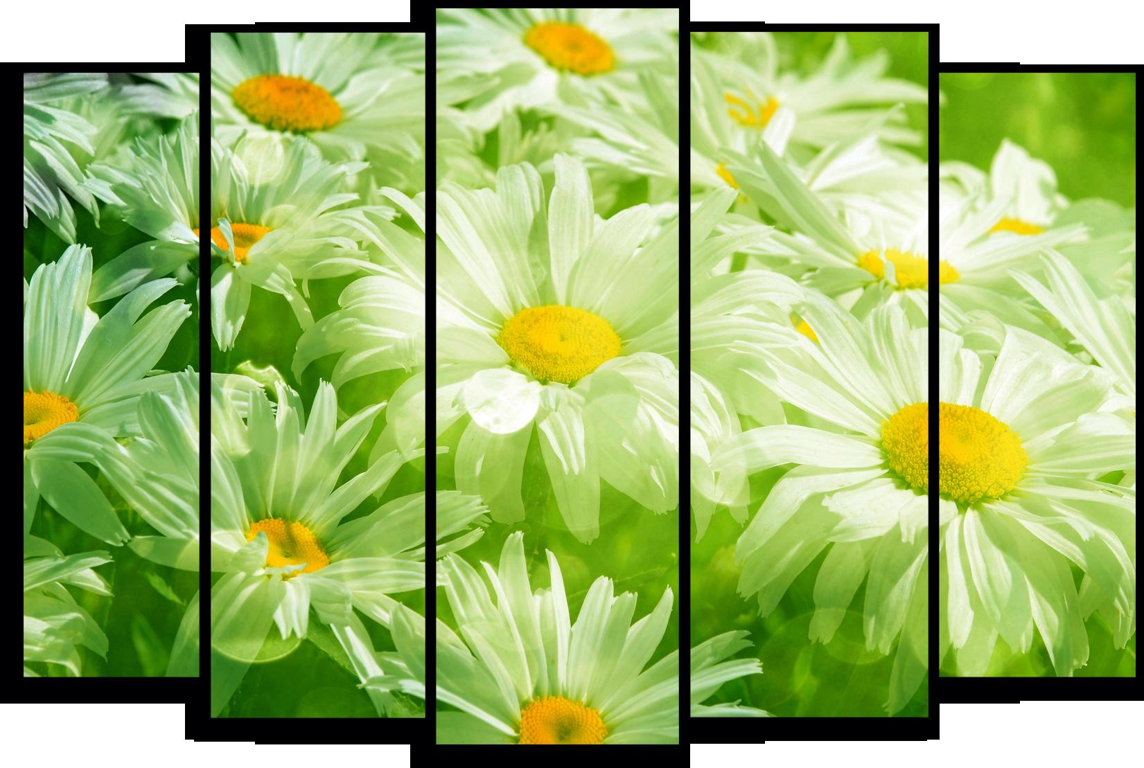 """Цветы Модульная картина """"Ромашки в зеленых тонах"""" М793.png"""