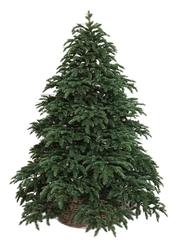 Triumph tree ель Нормандия темно-зеленая 2,15 м