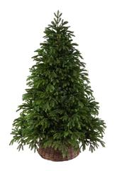Black Box ель Коттеджная 2,15 м зеленая