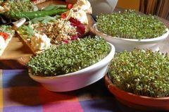 Проращиватель Eschenfelder для семян микрозелени, 12 см бордовый