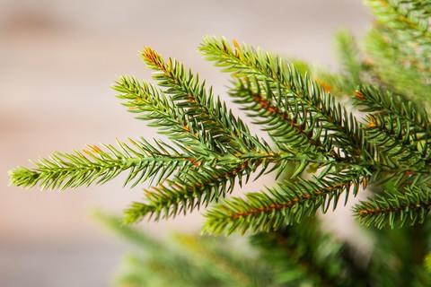 Искусственная елка Королевская Премиум 200 см зеленая