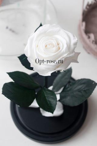 Роза в колбе Premium Оптом(Выс*Диам*Бутон 27*15*7-8см)Цвет белая