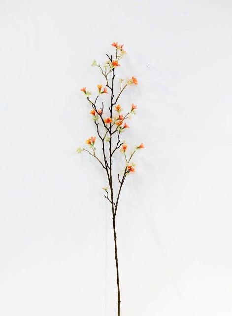 Ветка гептакодиума оранжевая