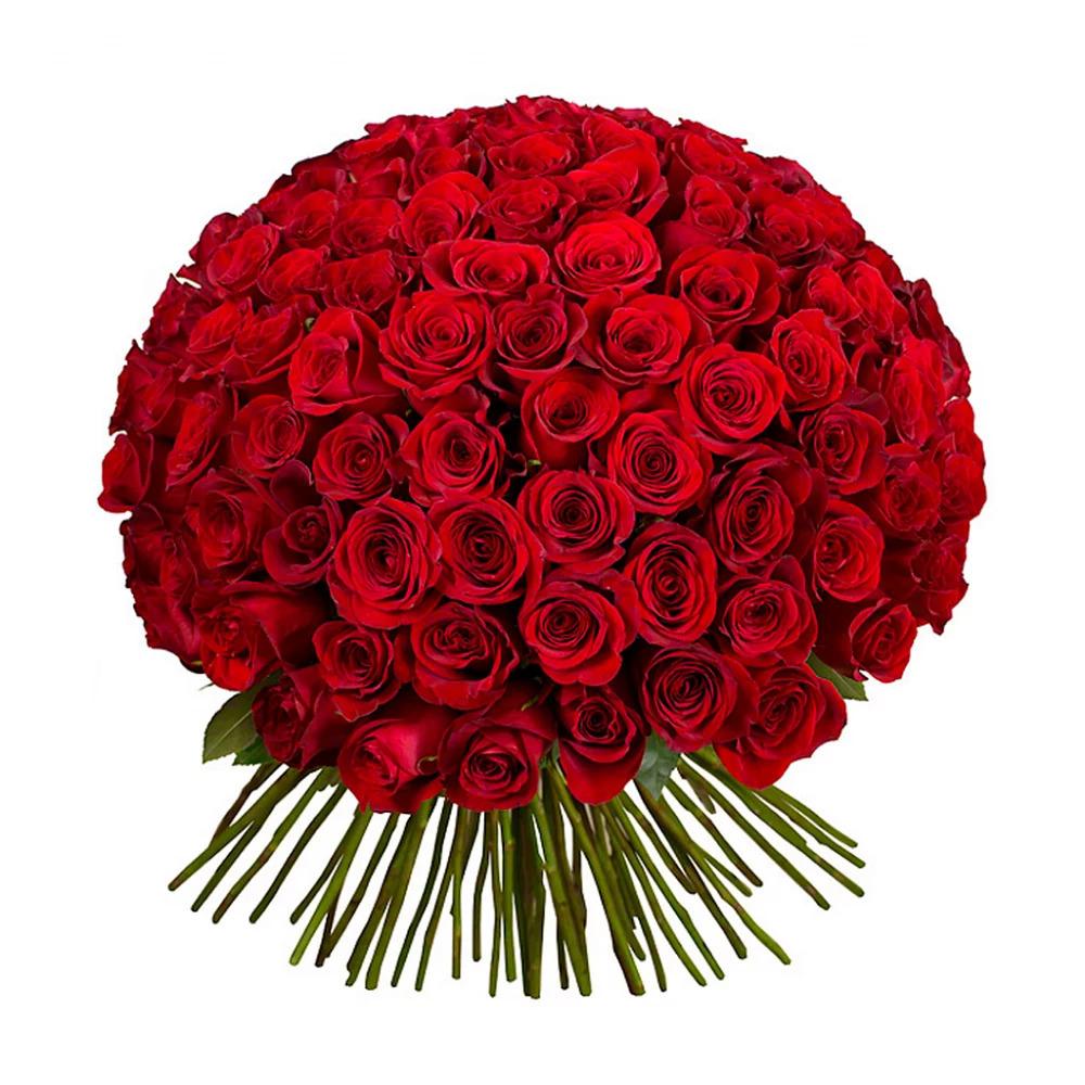 101 красная роза (60 см)