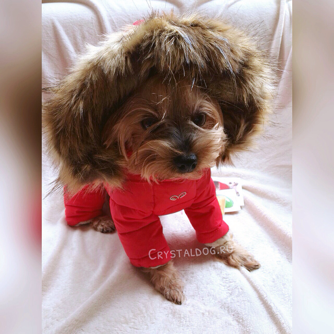 купить зимний комбинезон для маленькой собачки в москве