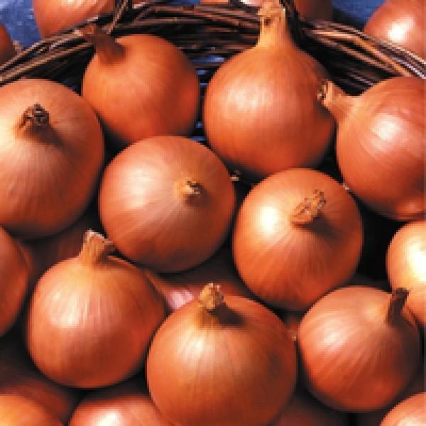 Репчатый Премито F1 семена лука репчатого (Seminis / Семинис) Премито.jpg