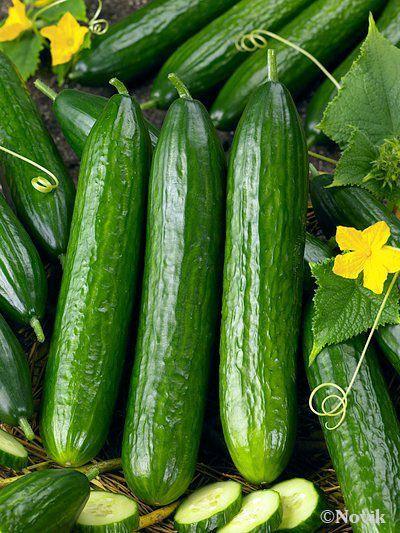 Гавриш Карина F1 семена огурца партенокарпического (Гавриш) Карина_семена_овощей_оптом.jpeg