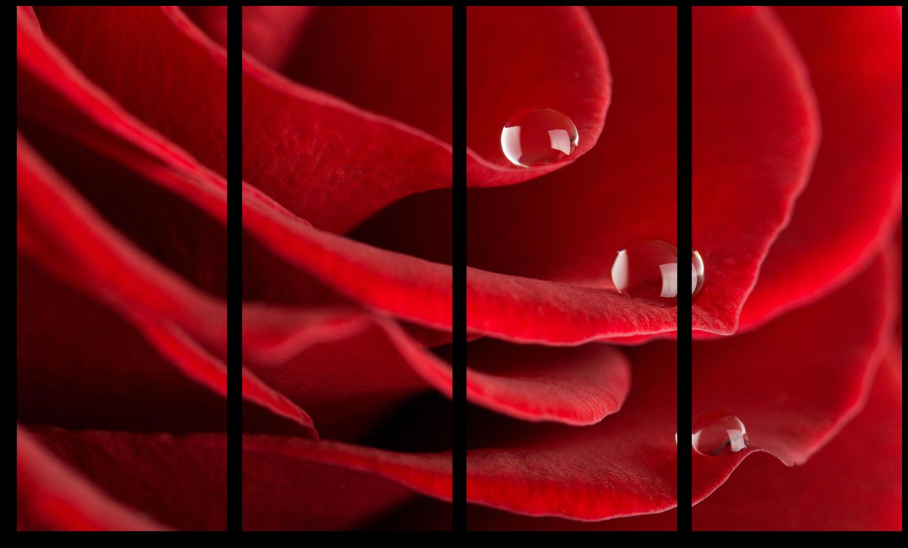 "Цветы Модульная картина ""Розовая вода"" М550.png"
