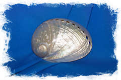 Перламутровая ракушка Галиотис лаевигата, Haliotis laevigat