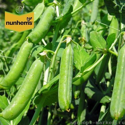 Nunhems Асана семена гороха (Nunhems / Нюнемс) асана.jpg
